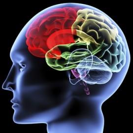 Hjärnan byggs av Omega 3-fettsyror